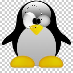 PSD PINGUIM LINUX